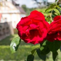 Schlossgarten_170904-8